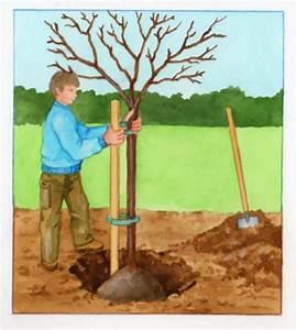 Planter Un Cerisier : plantation et culture des cerises ~ Melissatoandfro.com Idées de Décoration