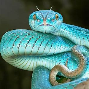 Related Keywords & Suggestions for Mythical Snakes