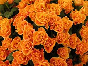 Orange Flowers Cute Wallpapers & Backgrounds Photos ...