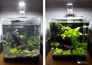 Aquarium Einrichten 60l : so habe ich mein nano aquarium eingerichtet dennerle ~ Michelbontemps.com Haus und Dekorationen