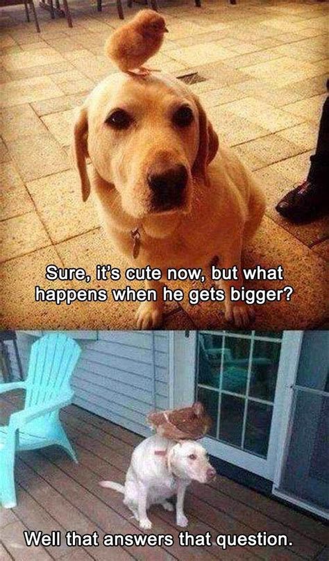 Animal In Bed Meme - 1000 ideas about hilarious animals on pinterest funny pets cute pics and cute animals