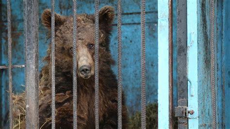 animals armenia zoo depressed locked abandoned starving horror saddest captured photographer armenian left roger allen shocking bears lion being entertainment