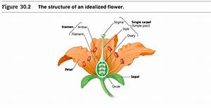 Which Structure Is A Characteristic Found Only In