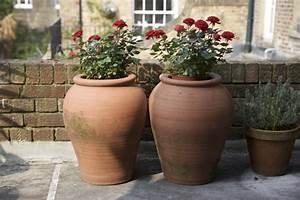 Hohe Pflanzkübel Für Rosen : topfrosen pflanzen und pflegen diese rosen kann man im ~ Whattoseeinmadrid.com Haus und Dekorationen