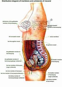 Abdomen Diagram