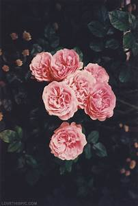 Vintage Pink Flowers Pictures, Photos, and Images for ...