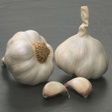 new garlic varieties