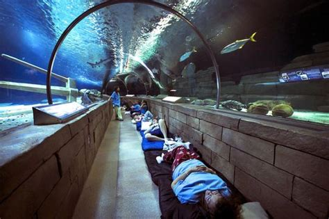overnight sleeping in the 300ft tunnel picture of sea minnesota aquarium