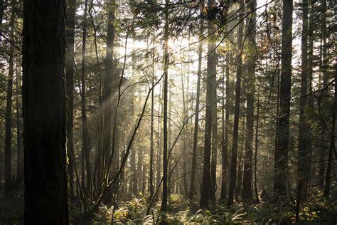 picture wood tree fog poplar nature landscape