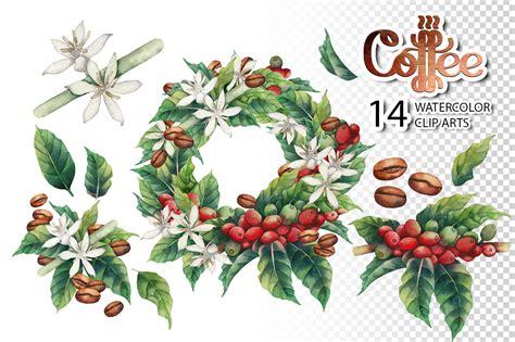 watercolor  graphic coffee plants  design elements