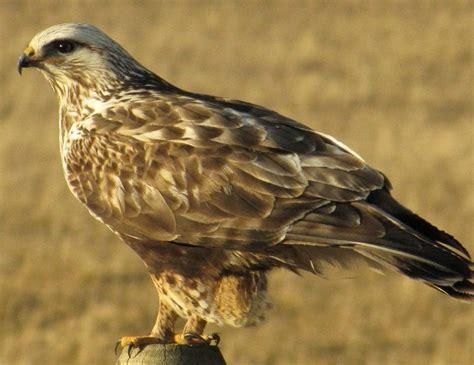 status of birds in canada bird canada
