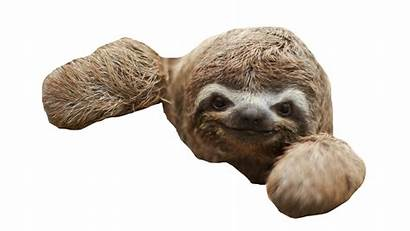 Sloth Virtual Reality Pluspng Transparent Sloths Pngimg