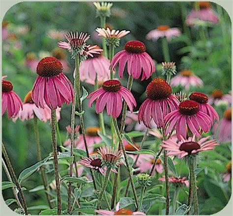 plant types annual perennial what is an annual perennial biennial
