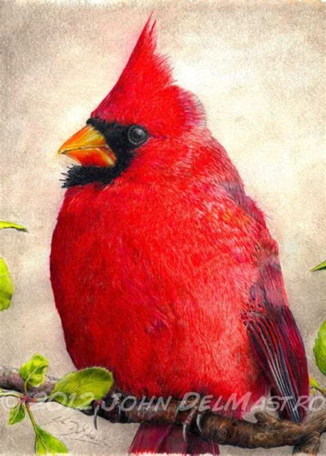 aceo atc size print color pencil drawing cardinal bird by