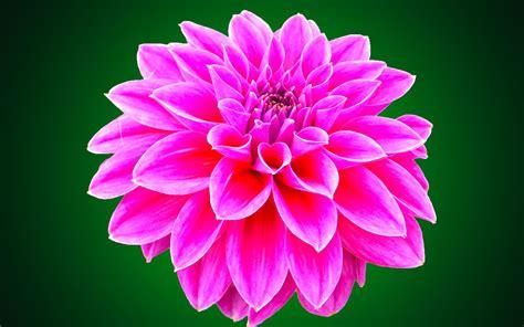 Wallpaper Flower Beautiful