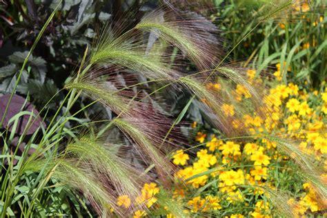 Pilze Botanischer Garten by Botanischer Garten Foto Bild Pflanzen Pilze