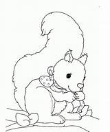 Squirrel Coloring Pages Printable Animal sketch template