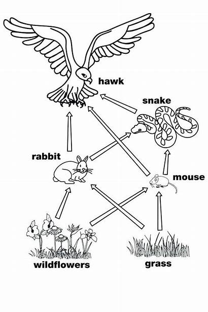 Chain Coloring Pages Web Chains Primary Science