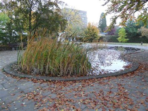 Botanischer Garten Mainz by Botanischer Garten Mainz Astilben Und Farne Bild