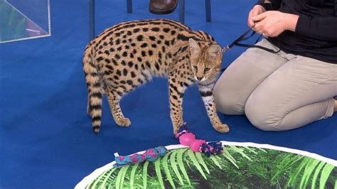 Jack Hanna brings a surprise animal live to 'GMA' Video ...