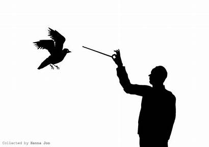 Conductor Wfmu Pigeon Clay Playlist Silhouette Wake