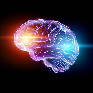 Biological Basis Of Behaviour  The Nervous System