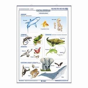 Pin Reino-animalia-invertebrados on Pinterest