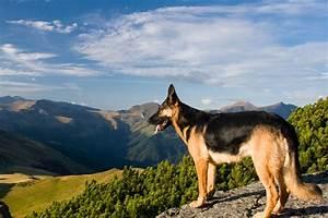 Urlaub Mit Hund Hundefreundliche Hotels