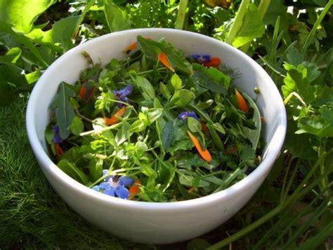 cuisine plantes sauvages comestibles cuisiner des plantes sauvages l 39 herberie du beaumont