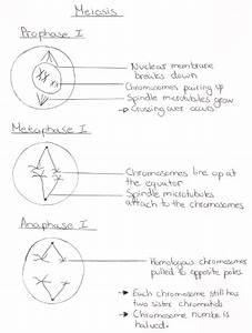 Ib Biology Notes