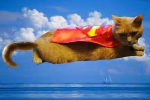 cat cape simon s new cape