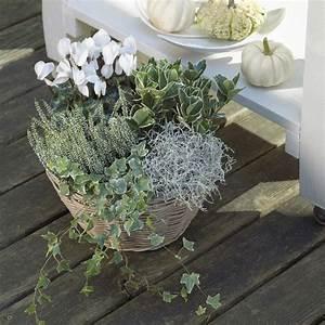 Balkonkästen Winterhart Bepflanzen : balkon garten im herbst und winter forum glamour ~ Lizthompson.info Haus und Dekorationen