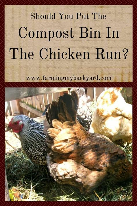 Should You Put Your Compost Bin In The Chicken Run