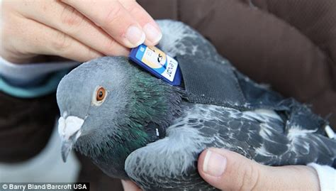 pigeon post meet the birds with a backpack who deliver
