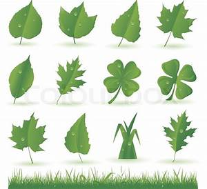 Collection Of Green Leaves Isolated On