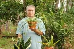 Aloe Vera Essbar : kamelie umtopfen so gehen sie dabei vor ~ Buech-reservation.com Haus und Dekorationen