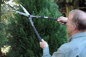Best Hand Grass And Hedge Shear Reviews Uk 2018