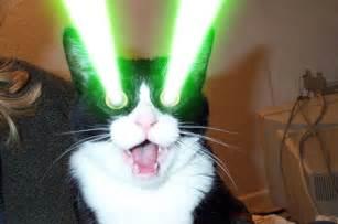 cat laser cat power headlined hammerstein ballroom setlist