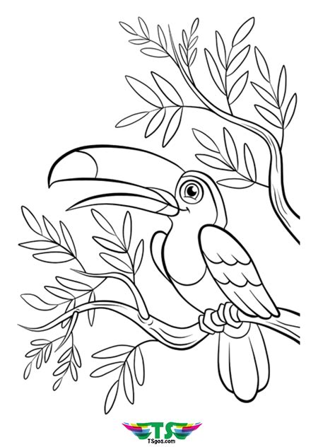 beautiful bird coloring page   tsgoscom