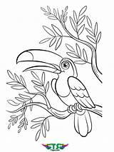Coloring Bird Tsgos Creative sketch template