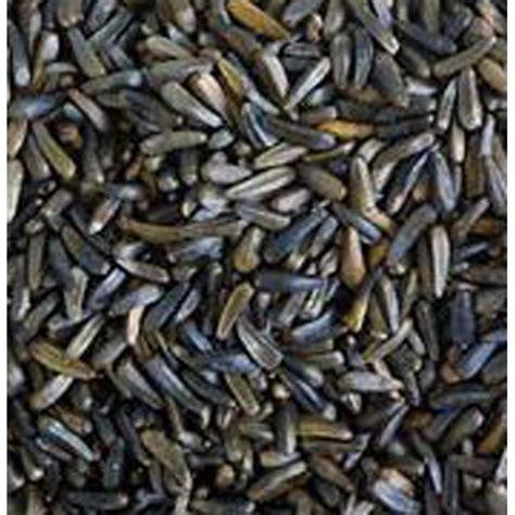 niger seed for birds 12 75kg