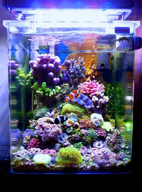 the italian nano cube aquarium journals nano reef community