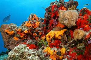 Sea Sponges: Characteristics, reproduction, uses and more.....