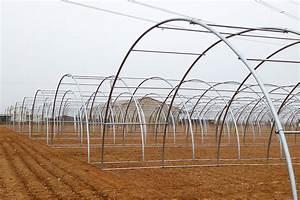 Invernadero túnel Sencillo, resistente y económico