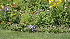 Böschung Bepflanzen Fotos : wie man steile h nge und b schungen bepflanzt lagerhaus ~ Orissabook.com Haus und Dekorationen