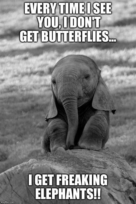 Elephant Meme - elephant imgflip