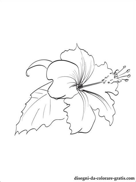 ibisco disegni da colorare disegni da colorare gratis
