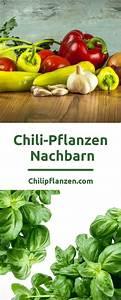Pflanzen Für Gute Raumluft : chili und paprika gute nachbar pflanzen garten chili ~ A.2002-acura-tl-radio.info Haus und Dekorationen