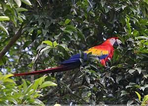 Honduras Animals - Wildlife in Honduras