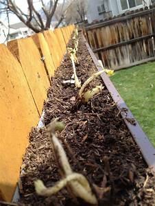 Kellerasseln Im Garten : die 25 besten ideen zu erdbeeren pflanzen auf pinterest die pest kleine pick ups und ~ Eleganceandgraceweddings.com Haus und Dekorationen